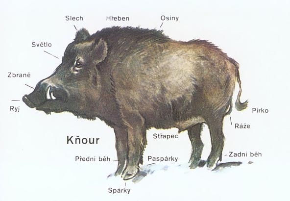 prase knour